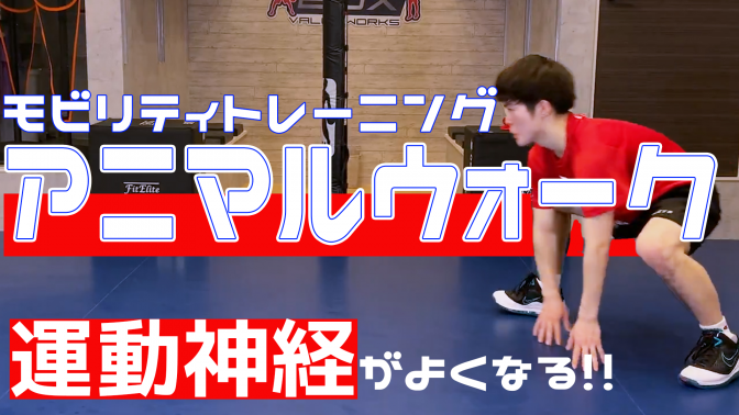 """【モビリティトレーニング】""""アニマルウォーク"""" 運動神経を繋げるトレーニング!"""